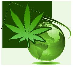Contact Graines de Cannabis